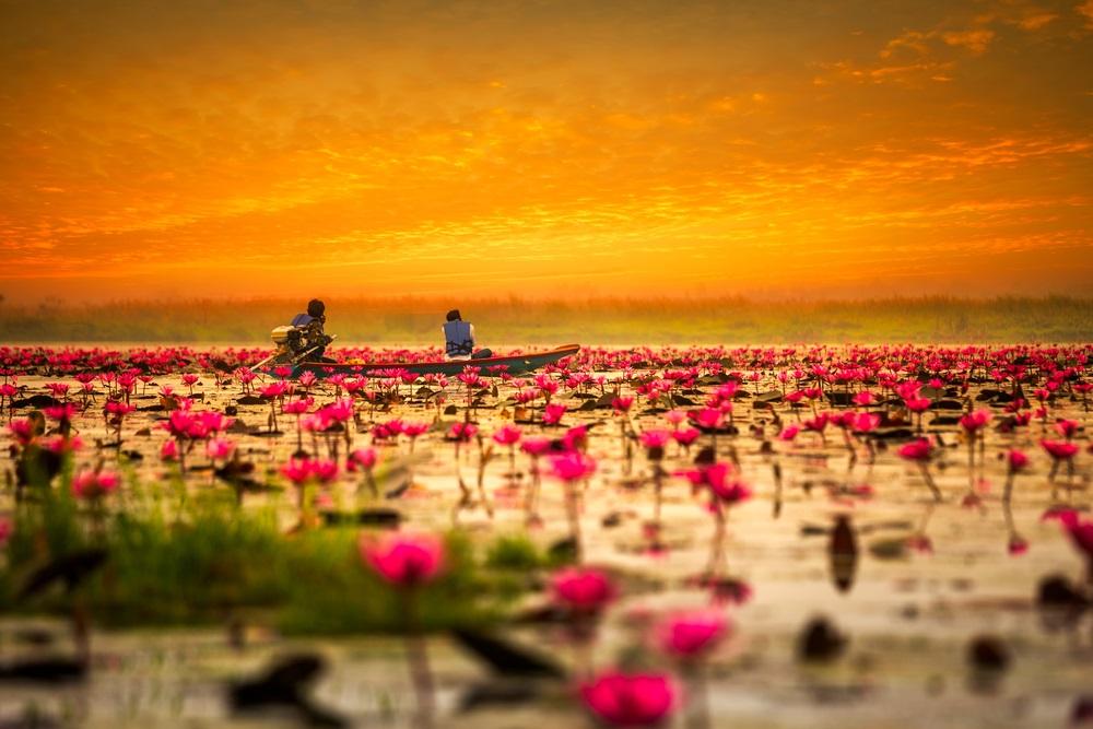 Lacul roz Thailanda