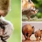 Imagini absolut emoționante și înduioșătoare: 15 dovezi că animalele își iubesc puii enorm!