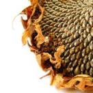 Din retetele vindecatorilor de odinioara: terapia cu seminte