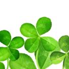 Cum sa-ti ajuti norocul. Patru principii simple care iti vor schimba norocul – si viata