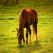 20 de imagini cu cai
