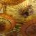 Horoscopul Chinezesc al iubirii pentru Primul Trimestru - Primavara  2011