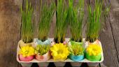 Cofraj de oua cu oua decorate cu flori si oua cu grau verde in pamant