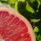 Dieta cu Grapefruit - slabeste intre 6 si 10 kilograme