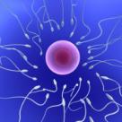 Sexul programat - fertilitate, zodia si sexul copilului
