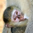 Bebelusi de animale
