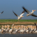 Mai, cea mai buna luna de vizitat Delta Dunarii. Top 3 motive