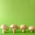 Mancarica inabusita de ciuperci