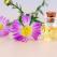 4 ape florale pentru îngrjire delicată pe timp de vară