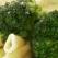 Penne ziti cu sos de unt si broccoli