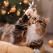 Pisicuțele și Crăciunul: Compilație amuzantă de sezon