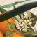 Craciunul Organic - festivalul Craciunului Verde pe 17 si 18 decembrie
