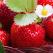 CAPSUNILE - Inima Vietii. Beneficiile extraordinare ale consumului de capsuni