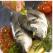 Pastrav cu legume si masline la cuptor