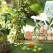 Noua colecție CITRUS BLOSSOM: Păstrează parfumul verii!