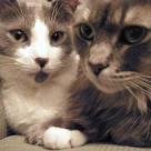 5 rase de pisici superbe