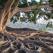Natura este UIMITOARE: Top 10 Cei mai Spectaculosi Copaci din lume