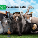 Test de personalitate: Ce animal esti?