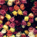 Mesajele secrete ale florilor de primavara: semnificatiile culorilor florale