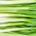 USTUROIUL VERDE: 8 motive extraordinare pentru care nu il vei mai considera niciodata o leguma banala