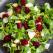 Beneficii extraordinare pentru corp: Top 7 alimente cu efect antiinflamator