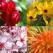 Limbajul secret al florilor: cum sa ne exprimam sentimentele