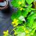 Rostopasca: Elixirul GALBEN al sănătății