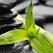 Cele 5 Adevaruri ayurvedice ale DRAGOSTEI si cum sa le pui in aplicare