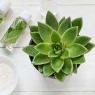 Ce beneficii ne aduc cosmeticele naturale?