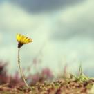 Lectii de viata: 5 lucruri pe care sa ti le reamintesti atunci cand simti ca ai pierdut fericirea
