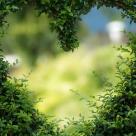 Vindecarea unei inimi ranite: 10 leacuri cicatrizante pentru suflet