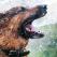 Ghid complet: Cum ajutam animalele de companie sa scape de canicula