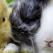 Agresivitatea la iepuri