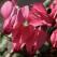 5 flori de apartament