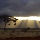 Safari - Intoarcerea la natura costa mult