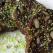 Reteta de post: Salam de biscuiti