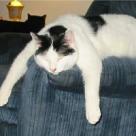 Cele mai haioase pisici somnoroase