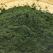 Spirulina - alga miraculoasa cu proprietati tamaduitoare