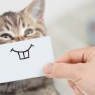 Top 5 cele mai haioase clipuri cu animale