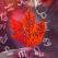 Horoscopul lunii SEPTEMBRIE 2020 de la A la Z (Berbec - Pesti)