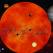 Horoscop noiembrie 2016: Ce se intampla in viata zodiilor in urmatoarele 29 de zile, dar mai ales in Dragoste (+Bani si Cariera)