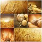 Traditii, obiceiuri si superstitii de Sfanta Maria Mica