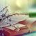 Top 5 cărți pe care să le citești în această primăvară