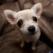 Top 8 rase de caini pentru apartament