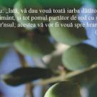 Plante si miresme biblice. Hrana pentru suflet si trup