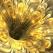 Horoscop: Floarea astro-magica a zodiei tale