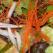 Salata neobisnuita