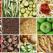 5 verdeturi de primavara de introdus in dieta de detoxifiere. ASAP