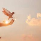 Horoscopul pasarilor: Afla ce pasare iti poarta mesajul personal spre cer!