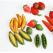 Morcovi cu fructe